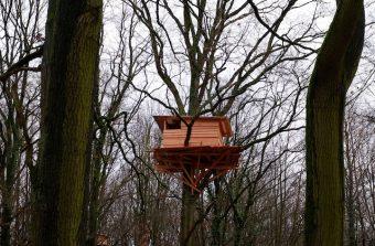 Le bain de forêt, futur parcours artistique à Tremblay
