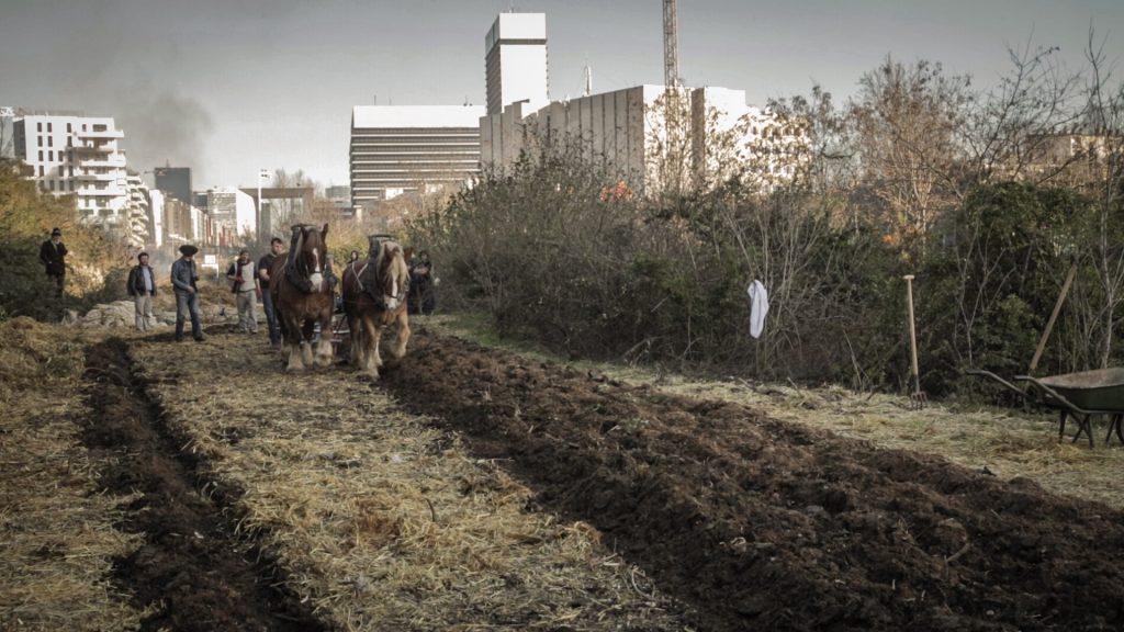 Travaux des champs à la Ferme du bonheur à Nanterre / © Justine Bourgade