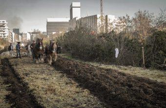 Un week-end paysan à 3km à vol d'oiseau des tours de La Défense