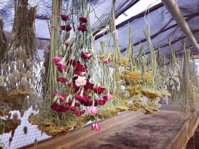 Les serres de Fleurs de Cocagne en Essonne / © Fleurs de Cocagne