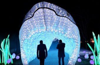 Océans en voie d'illumination, une expo qui a de la gueule