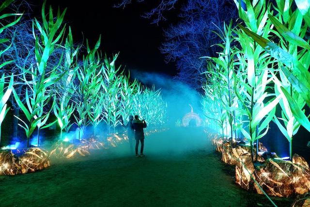 """""""Océans en voie d'illumination"""" au Jardin des plantes à Paris / © Solenn Cordroc'h"""