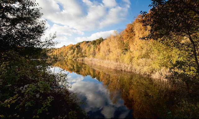 La forêt de Bondy / © AEV - Jean-François Hellio et Nicolas Van Ingen