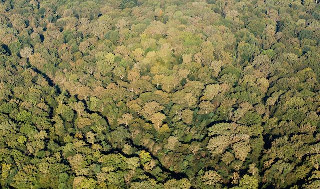 La forêt de Ferrières en Seine-et-Marne / © AEV - Jean-François Hellio et Nicolas Van Ingen