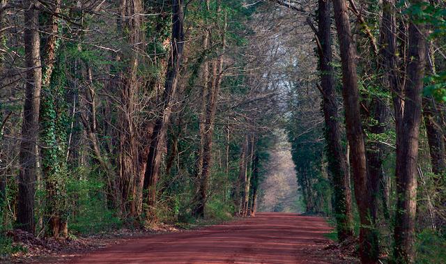 Forêt régional de Verneuil dans les Yvelines / © AEV / Fabien Chenel - L'Agence Nature