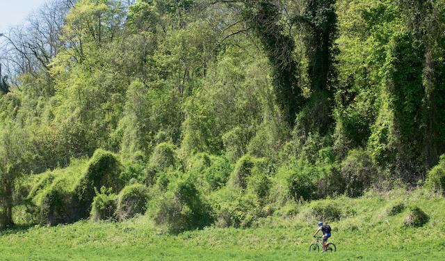La forêt régionale des Vallières en Seine-et-Marne / © AEV - Jean-François Hellio et Nicolas Van Ingen