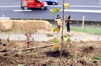 «Un arbre en ville n'est pas fait pour être isolé»