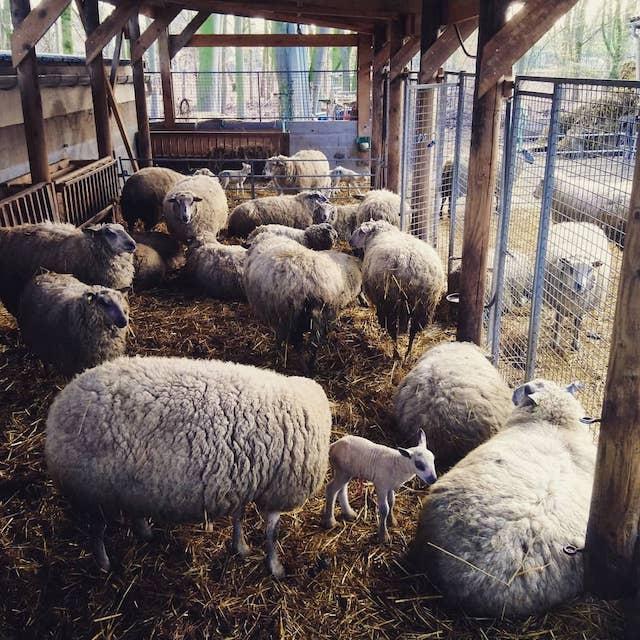 La bergerie de l'association Clinamen dans le parc de La Courneuve / © Guillaume Leterrier pour Clinamen