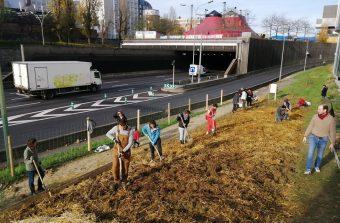 Micro-forêts urbaines : que penser de la « méthode Miyawaki » ?