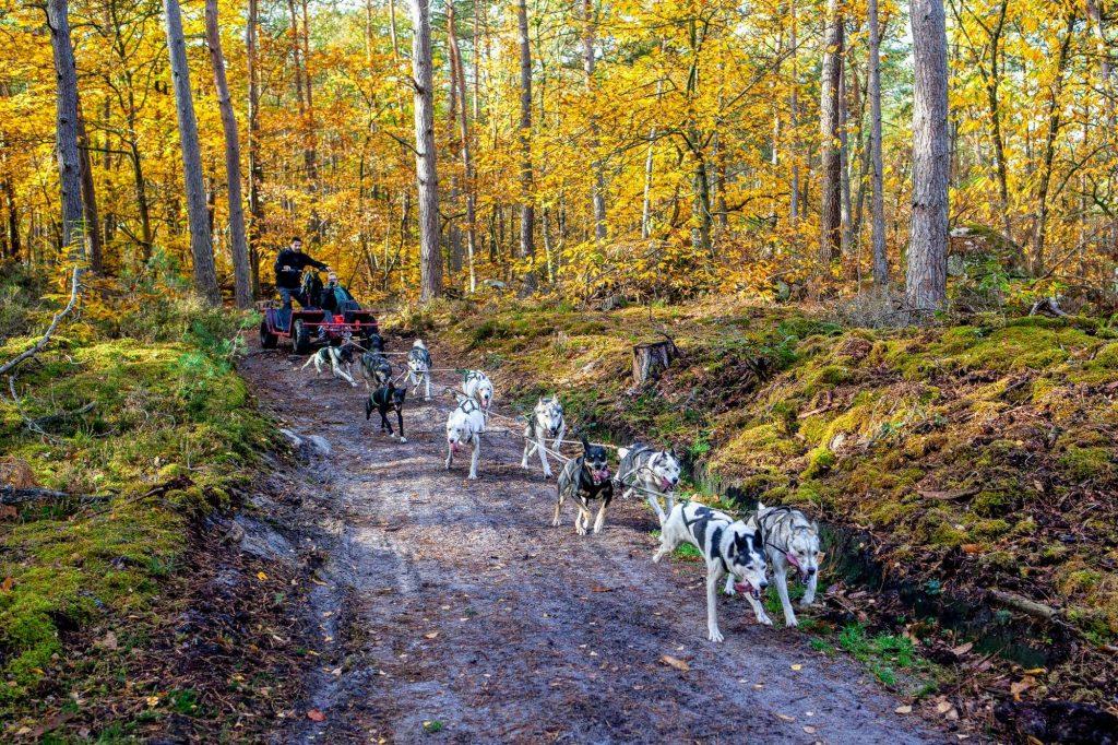 L'attelage du musher Christian Perlwitz, fondateur d'Evasion canine dans le parc naturel du Gâtinais / © Evasion canine