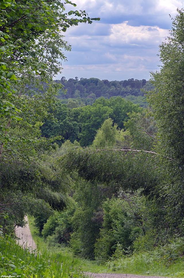 La forêt d'Ermenonville dans le parc naturel Oise - Pays de France / © PNR Oise - Pays de France