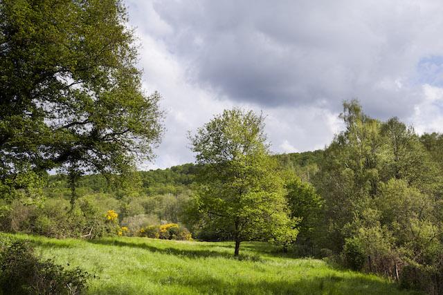 Le parc naturel de la Haute Vallée de Chevreuse / © PNR de la Haute Vallée de Chevreuse