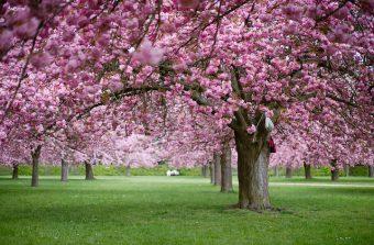 Le parc de sceaux vous fait voir la vie en rose