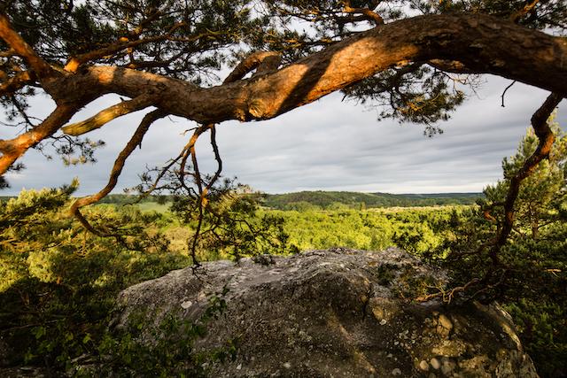 La forêt des Trois Pignons dans le parc naturel du Gâtinais / © Thierry Houyel