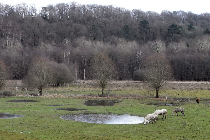 Le parc naturel de la Haute Vallée de Chevreuse / © Pierre Métivier (Creative commons - Flickr)