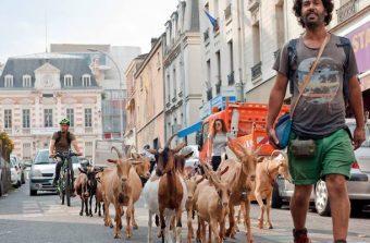 Gilles Amar, un berger à l'épreuve de la crise à Bagnolet