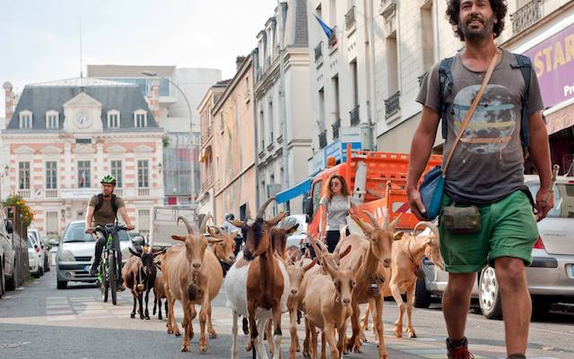 Gilles Amar et son troupeau à Bagnolet, où il a créé la bergerie des Malassis / © Sylvie Biscioni
