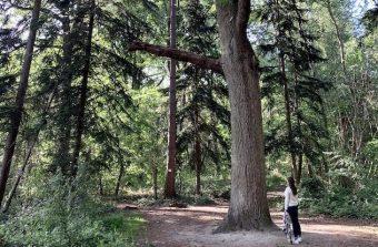 Mes retrouvailles avec le bois de Verneuil