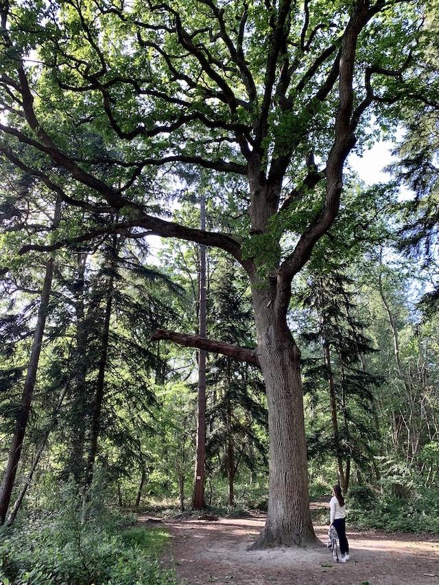 Le bois de Verneuil dans les Yvelines / © Manon Gayet pour Enlarge your Paris