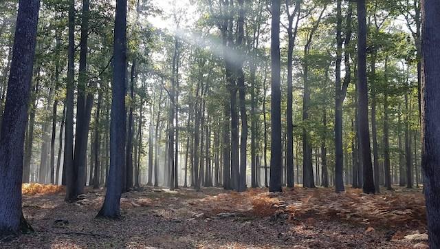 La forêt de Rambouillet / © Clément Lhommeau