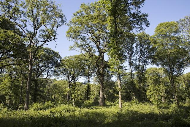 La forêt de Fausses-Reposes à Ville-d'Avray (Hauts-de-Seine), 616 ha (26 x le jardin du Luxembourg) accessibles par la Ligne U / © ONF