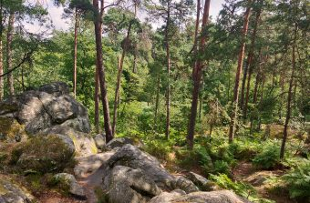 Cinq randonnées pour se déconfiner en pleine nature en Île-de-France