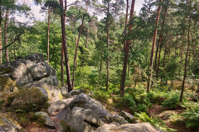La forêt de Fontainebleau, l'un des meilleurs sites de randonnée en Île-de-France / © Helloways