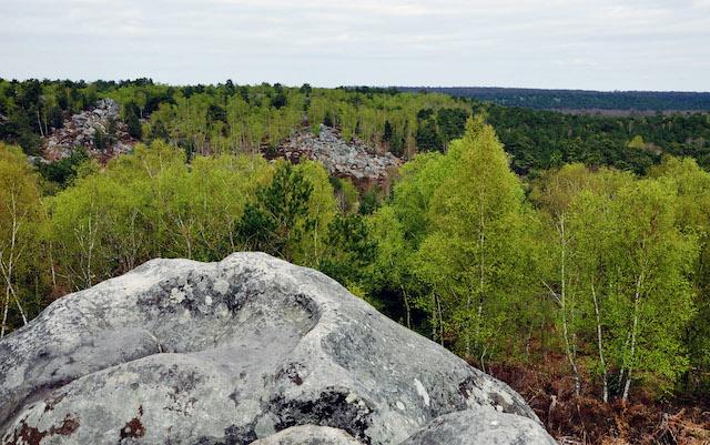 La forêt de Fontainebleau (Seine-et-Marne), 25.000 ha (1086 x le jardin du Luxembourg) accessibles par la ligne R