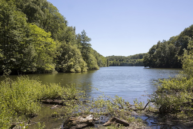 La forêt de Versailles (Yvelines), 1057 ha (45 x le jardin du Luxembourg) accessibles par la Ligne N / © ONF