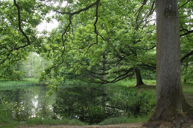 La forêt de Notre-Dame à Boissy-Saint-Léger (Val-de-Marne), 2000 ha (86 x le jardin du Luxembourg) accessibles par le RER A / © ONF