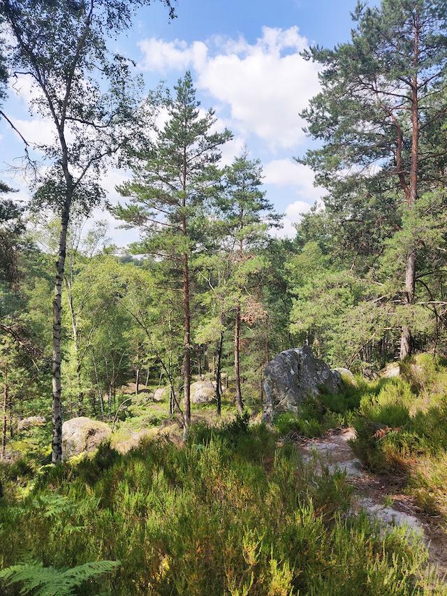 La forêt de Fontainebleau / © Helloways