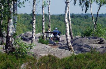 «Le changement climatique va transformer la forêt et le paysage franciliens»