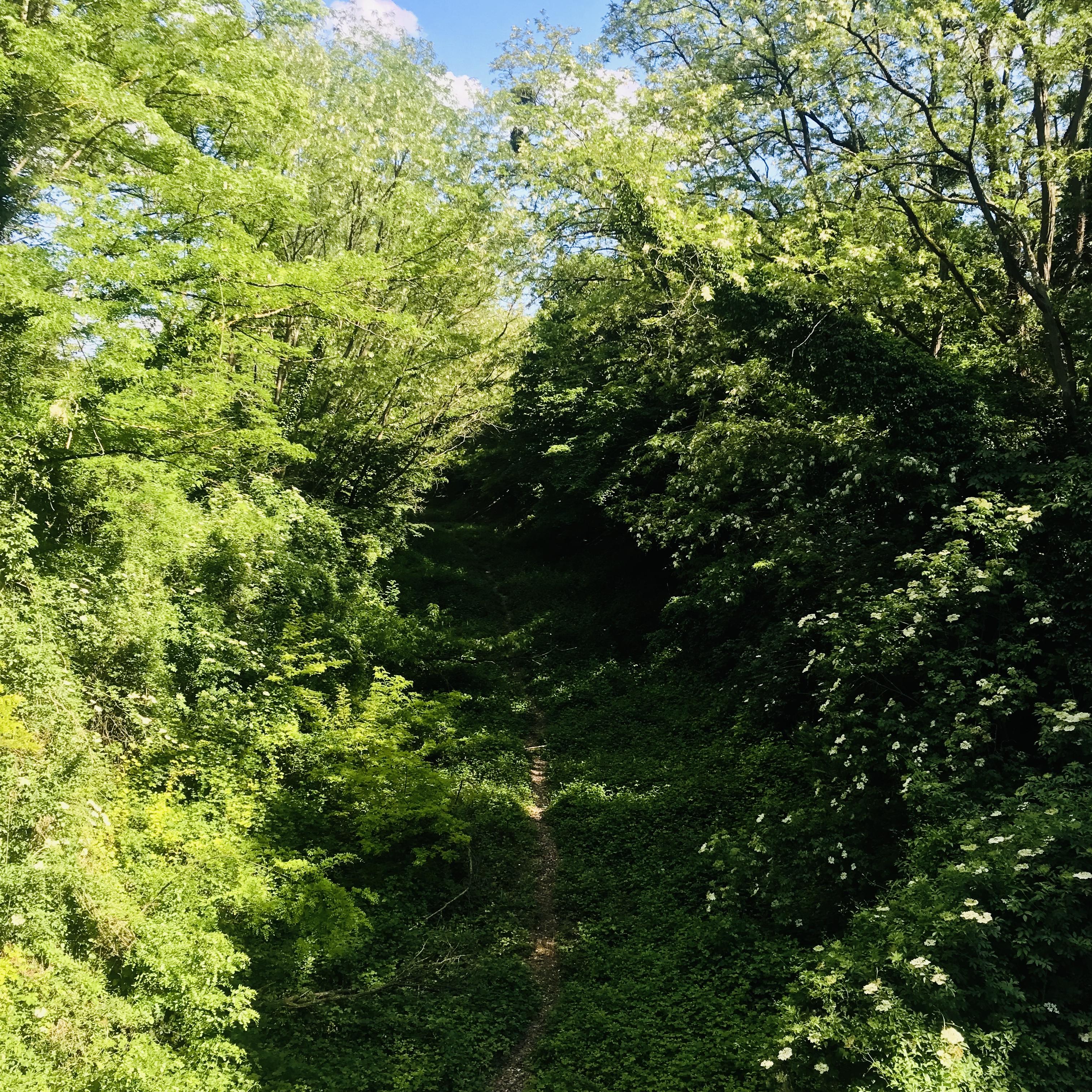 Ancienne voie ferrée en forêt de Saint-Germain-en-Laye / Vianney Delourme pour Enlarge your Paris.