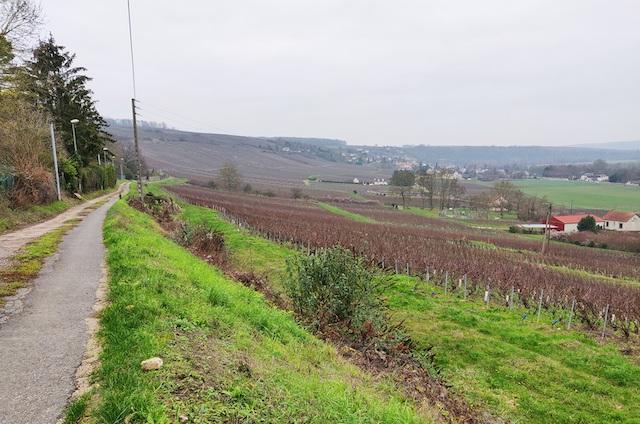 Les vignes de Champagne le long de la vallée de la Marne en Seine-et-Marne / © Helloways
