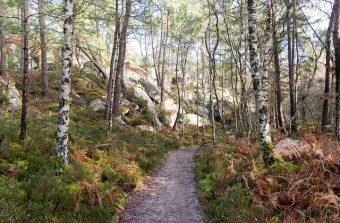 La forêt de fontainebleau hors des sentiers battus