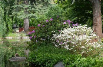 Le Jardin Albert Kahn, un jardin mappemonde accessible gratuitement jusqu'au 14 juillet