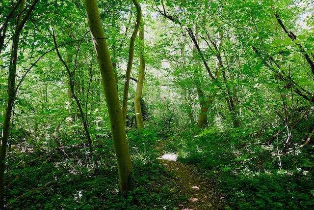 Sentier forestier dans le parc naturel du Vexin français / © Solenn Cordroc'h pour Enlarge your Paris