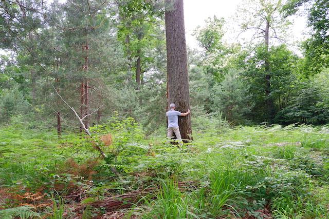 """Séance de sylvothérapie en forêt de Fontainebleau. Une expérience à tester lors du """"Week-end nature dans le Grand Paris"""" des 18 et 19 juillet / © Solenn Cordroc'h pour Enlarge your Paris"""