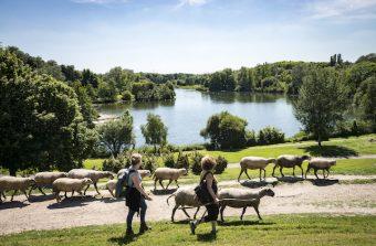 Devenez berger bénévole dans le parc de La Courneuve, 70 ha plus grand que Central Park