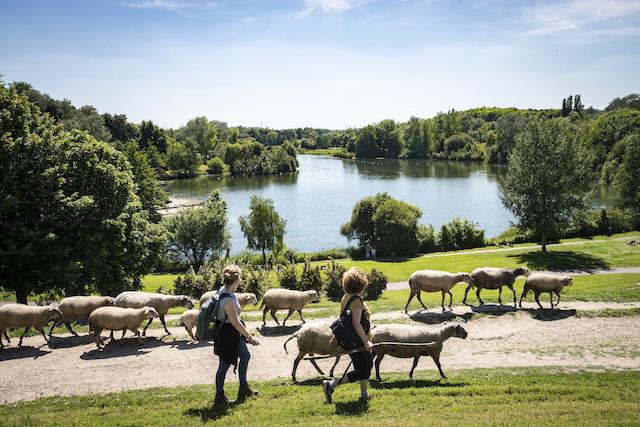 Les bergers urbains de l'association Clinamen dans le parc de La Courneuve / © Jérômine Derigny pour Enlarge your Paris