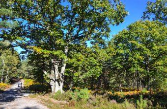 Les forêts d'Île-de-France ont leur festival