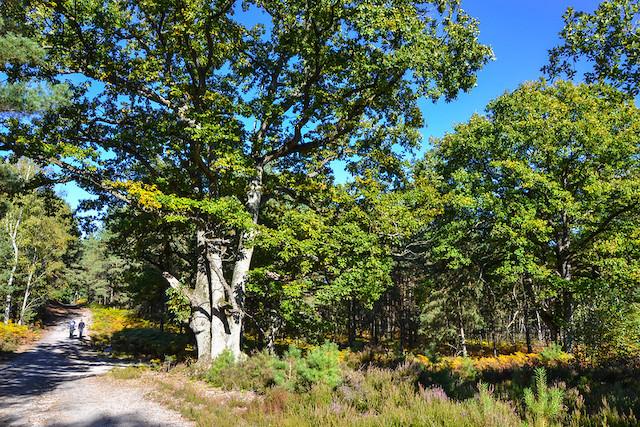 La forêt de Rochefort dans les Yvelines / © CD78 - MC Rigato