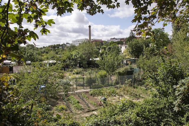Jour 8. Jardins ouvriers à Créteil en bord de Marne /  © Jérômine Derigny pour Enlarge your Paris