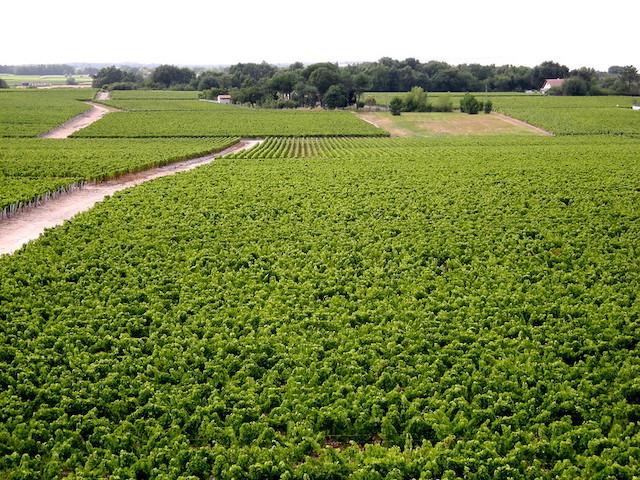 La viticulture, secteur essentiel de l'économie en Aquitaine, est déjà fortement impactée par les aléas climatiques /  © Claude37 (Creative commons - Flickr)