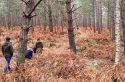 Les 3 plus grandes forêts d'Île-de-France où se perdre