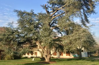 A Montesson, un arbre pour incarner une vision du soin par la nature