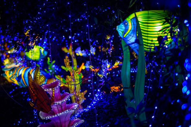 """Les lanternes géantes de """"Thoiry Lumières sauvages"""" au ZooSafari de Thoiry / © ZooSafari de Thoiry"""