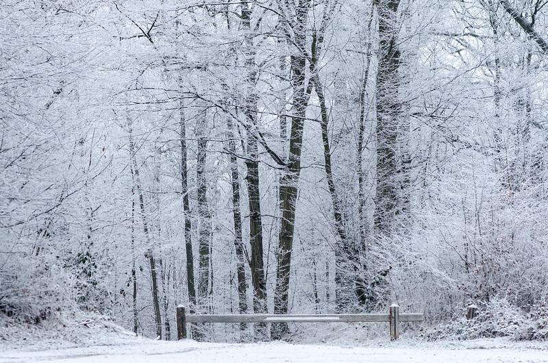 La forêt de Meudon / © Arseni Mourzenko (Creative commons – Flickr)
