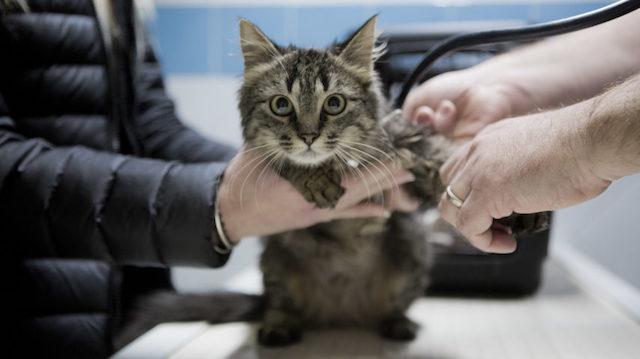 Le documentaire Ani-Maux, sur le quotidien des patients d'une clinique vétérinaire, sera diffusé en ligne samedi 20 mars dans le cadre des Journées cinématographiques organisées par plusieurs cinémas de Seine-Saint-Denis / © S. Petit