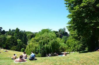 «Les arbres façonnent l'imaginaire de Paris»